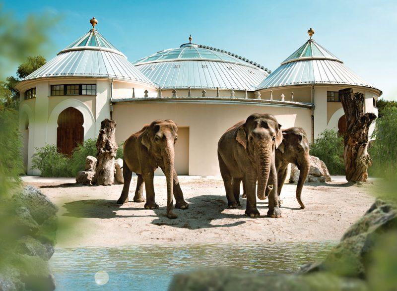 Elefanten Hellabrunn